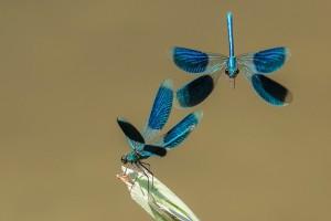 Libellen Deible.jpg