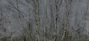 © Michael Lange_# 3662, 2011 aus der Serie WALD, Landschaften der Erinnerung.jpg