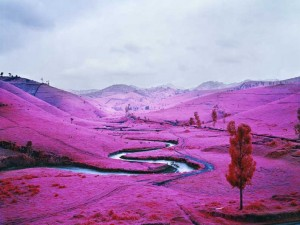 Platon 2012 C Richard Mosse  Courtesy of the artist and Jack Shainman Gallery, New York.jpg