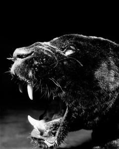 Jaguar © Gary Heery.jpg