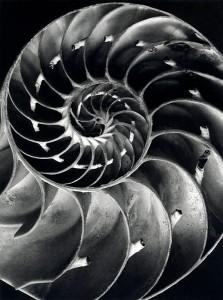 uerschnitt durch ein Nautilus Gehäuse 1940:41 © bpk : Alfred Ehrhardt Stiftung.jpg