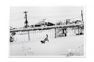 1138_ArakiChiroi.jpg