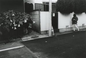 Araki_16.jpg
