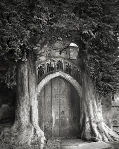ancient-trees-beth-moon-6.jpg
