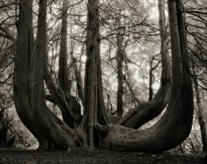 ancient-trees-beth-moon-14.jpg