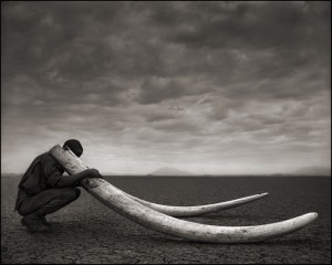 Ranger with Tusks 10inW 07-13**.jpg