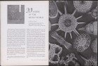LFIA-6-1955_en_page_018.jpg