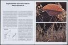 LFIA-4-1979_de_page_013.jpg