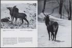 LFIA-6-1971_de_page_011.jpg