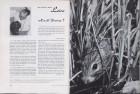 LFIA-4-1962_de_page_004.jpg