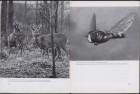 LFIA-3-1956_en_page_015.jpg