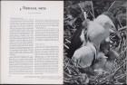 LFIA-6-1961_en_page_020.jpg
