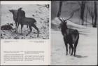 LFIA-6-1971_en_page_009.jpg