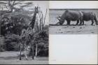 LFIA-1-1957_en_page_005.jpg