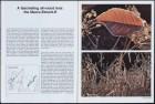 LFIA-4-1979_en_page_011.jpg