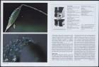 LFIA-4-1979_en_page_012.jpg