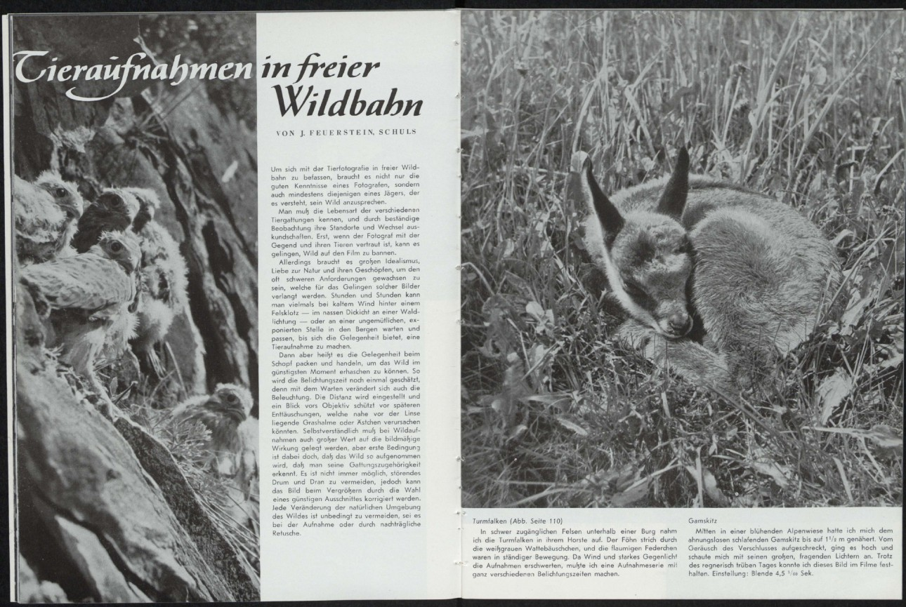 Lfi Magazine 03 1951 Lfi