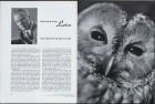 LFIA-3-1953_de_page_004.jpg