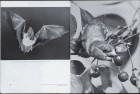LFIA-3-1953_de_page_007.jpg