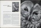 LFIA-3-1953_en_page_003.jpg