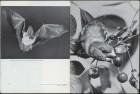 LFIA-3-1953_en_page_006.jpg