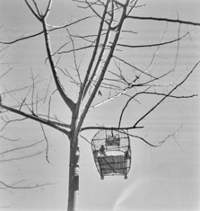 Arbre et cage, 1935.jpg