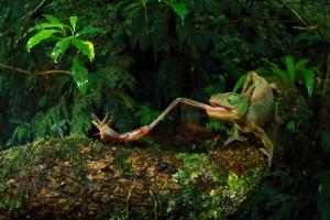 © Christian Ziegler - Chameleon Under Pressure 02.jpg