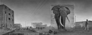 ROAD-WITH-ELEPHANT-4000px.jpg