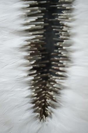 SISSURE RIFT detail Photo JP Bland  .jpg