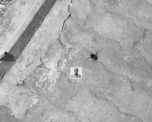 Durst_01_Portrait_with_Beetle.jpg