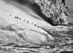 SS062_Chinstrap Penguins (1).jpg