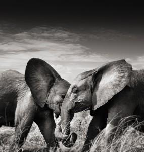 3_Couple I_Kenya 2010_copyright Joachim Schmeisser.jpeg
