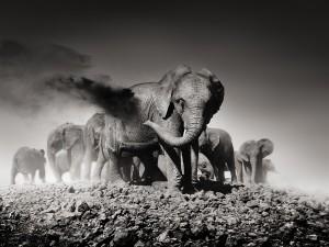 1_Earth I_Kenya 2013_copyright Joachim Schmeisser.jpeg