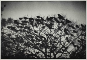 Kanazawa-1977-from-the-series-Ravens-C-Masahisa-Fukase-Archives_web.jpg