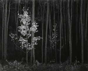 1_Ansel-Adams,-Aspens,-Northern-New-Mexico,-1958-web.jpg