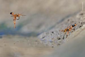 © Georgina Steytler - Wildlife Photographer of the Year.jpg
