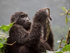 © Ricardo Núñez-Montero - Wildlife Photographer of the Year.jpg