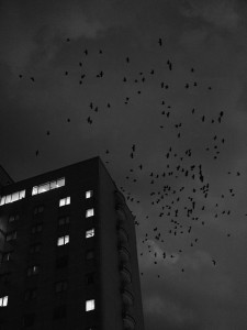 1_Simoneau,-Murder,-Kanazawa-01,-Ishikawa-Pref,-Japan,-2017-©-Guillaume-Simoneau,-courtesy-by-IBASHO_web.jpg
