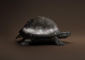 Vincent Frounier, Black Celestial Tortoise [Manouria Praecognito],(Post Natural History series), 2018.jpg