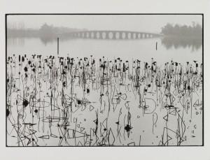 Rene Burri_Fleurs de lotus sechees sur lac de Kunmiung_Chine_1964 (C) Rene Burri_Magnum Photos_Fondation Rene Burri_Musee Elysee.jpg