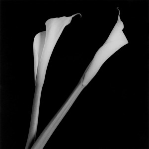 7_Robert Mapplethorpe_Calla Lilies_1985_Courtesy of Galerie Thomas Schulte_copyright Robert Mapplethorpe Foundation. Used by permission_web.jpg