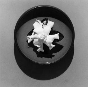 2_Robert Mapplethorpe_Gardenia, 1978_Courtesy of Galerie Thomas Schulte_copyright Robert Mapplethorpe Foundation. Used by permission.jpg