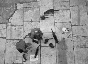 2_OrkinWomenfeedingcats.Rome.jpg