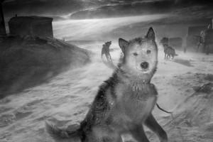 1_Arctic heroes-Greenland.jpeg