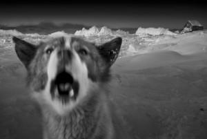 3_Arctic heroes-Greenland-6.jpeg