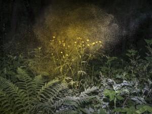 1_Inka & Niclas_Luminous Matter I, 2019.jpeg