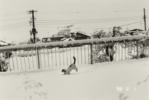 araki_sentimental_journey_1_2_1990_c_nobuyoshi_araki.jpg