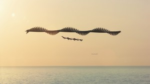 JP21_AUS_Ornitographien©Xavi_Bou.jpg