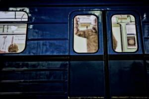Metro c Tobias Egle.jpeg