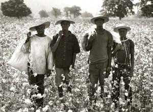 Cotton Farmers, Koulegou Field, Tanguieta, Benin, 2011.jpg